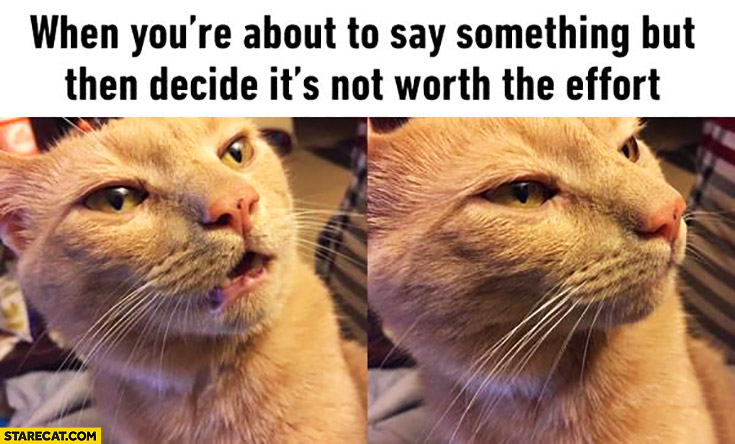 When you're about to say something, but then decide it's not worth the effort cat