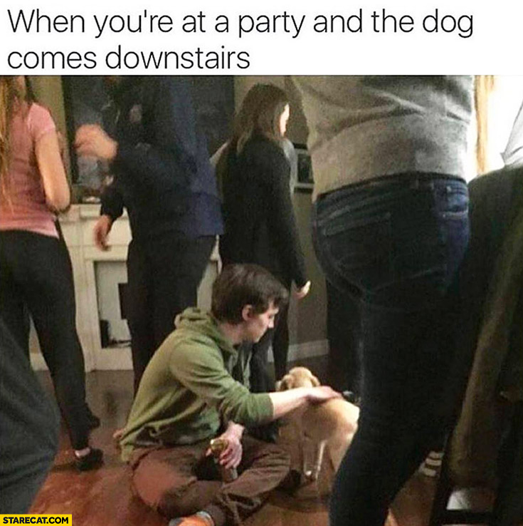 When you're at a party and the dog comes downstairs you ignore the party