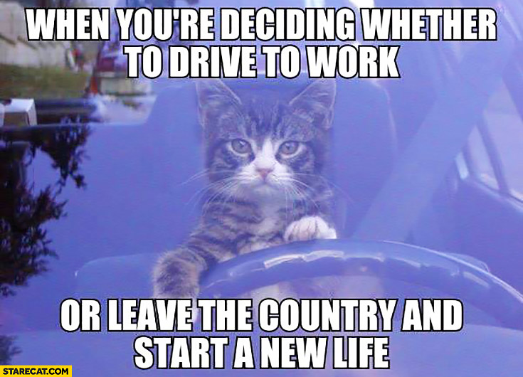 when youre deciding whether to drive to work or leave the country and start a new life cat driving when youre deciding whether to drive to work or leave the country