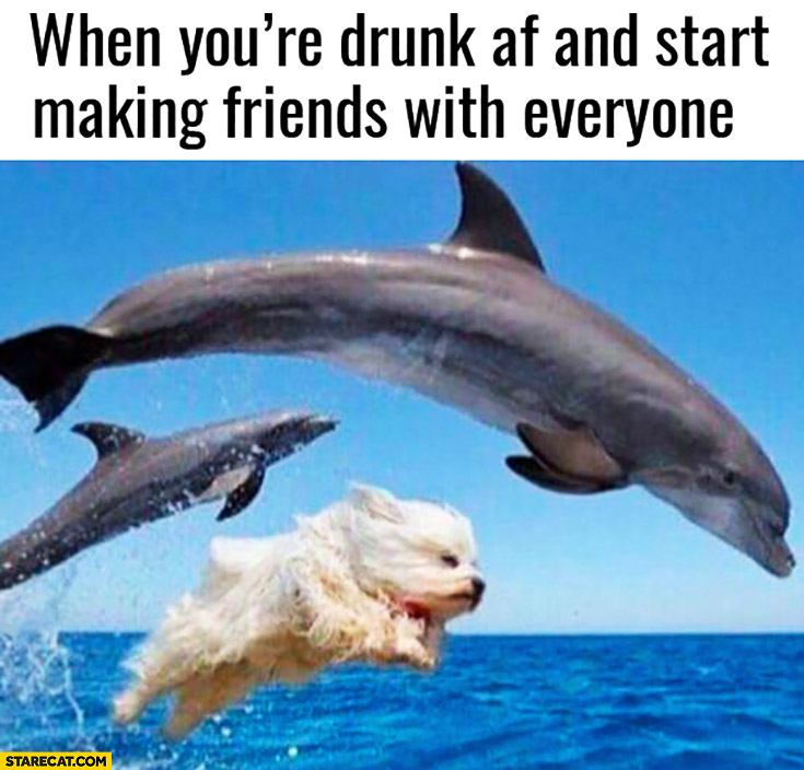 When youre drunk af and start making friends with everyone dog dolphins
