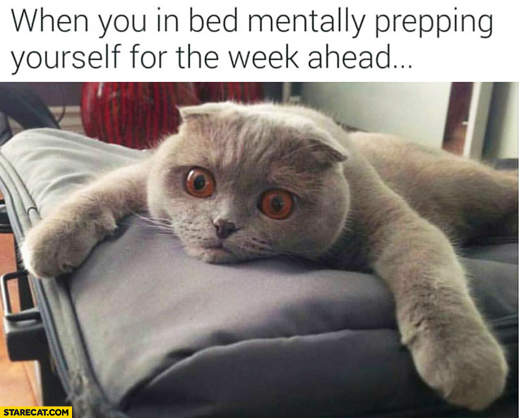 When you're in bed mentally prepping yourself for the week ahead terrified cat