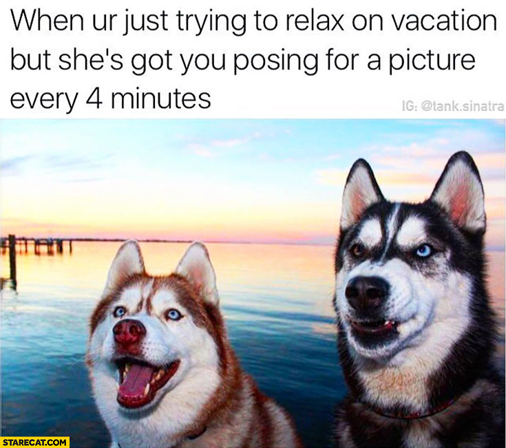 When you're just trying to relax on vacation but she's got you posing for a picture every 4 minutes Husky dogs