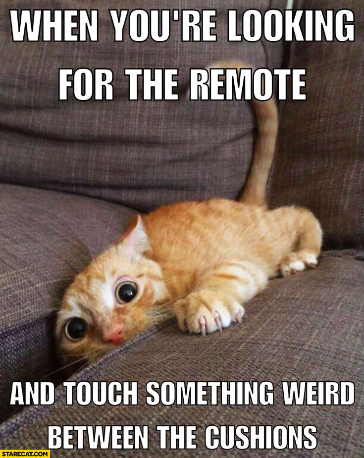 When you're looking for the remote and touch something weird between the cushions cat big eyes
