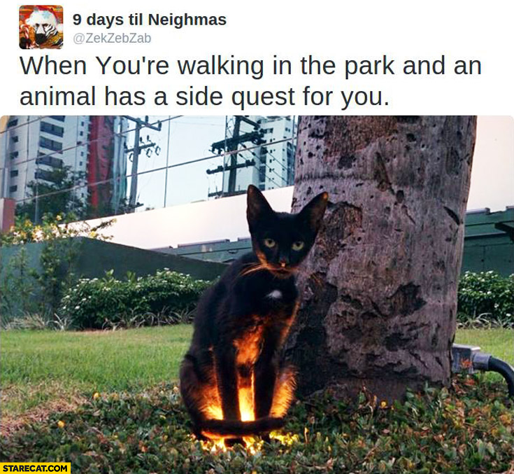 When you're walking in the park and an animal has a side quest for you highlighted cat