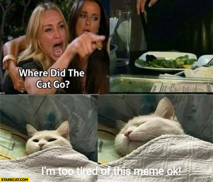 Where did the cat go? I'm too tired of this meme ok?