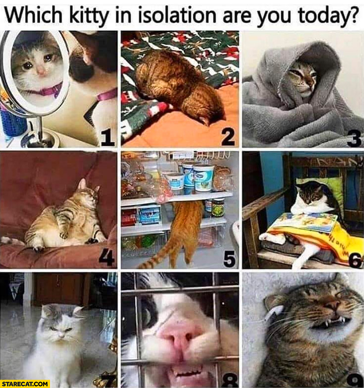 Which kitty in isolation are you today? Numbers 1 to 9