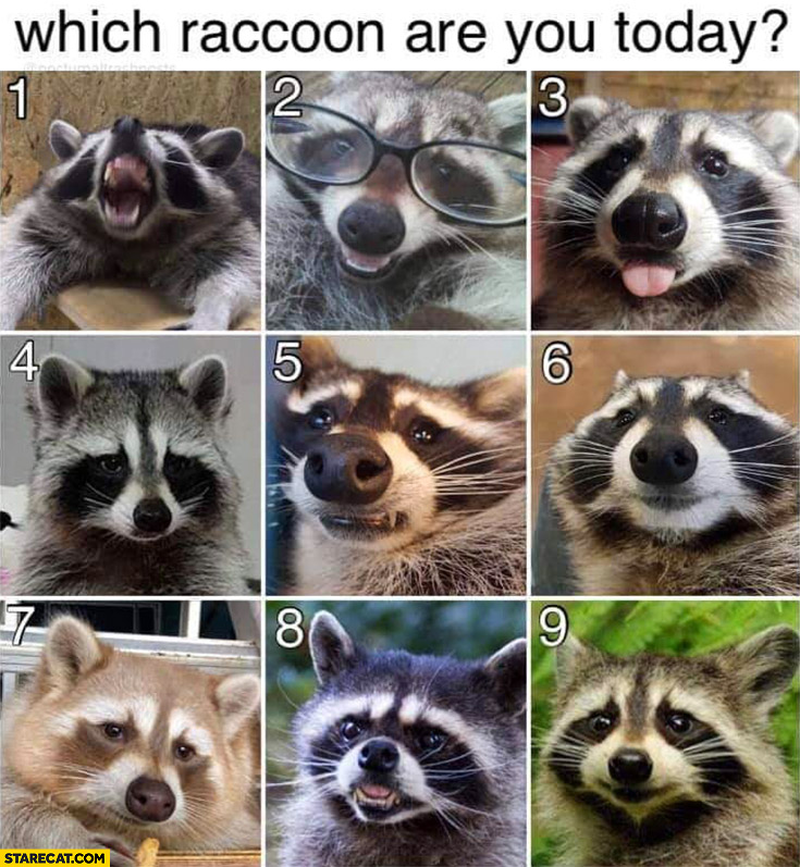 Which raccoon are you today?