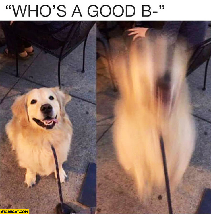 Who's a good boy dog instantly jumps