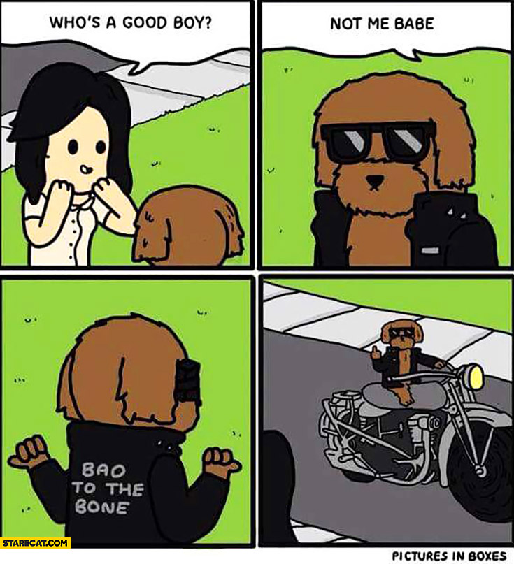 Who's a good boy? Not me babe, bad to the bone. Harley dog comic