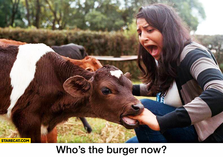 Who's the burger now? Cow biting girls hand