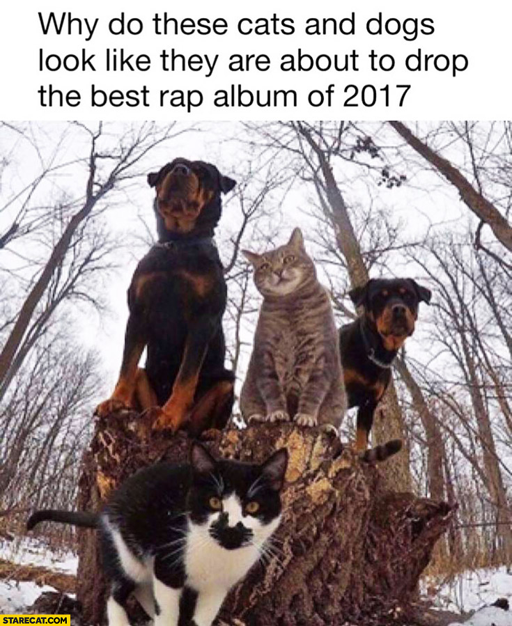 Why do these cats and dogs look like they are about to drop the best rap album of 2017?