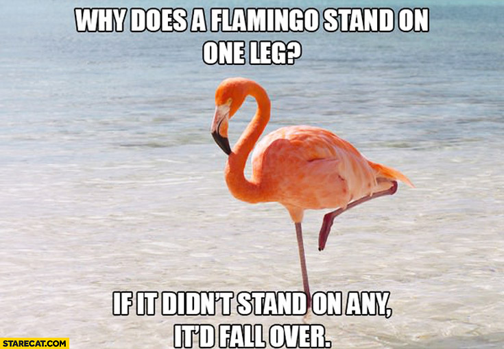 Why does a flamingo stand on one leg? If it didn't stand on any it'd fall over