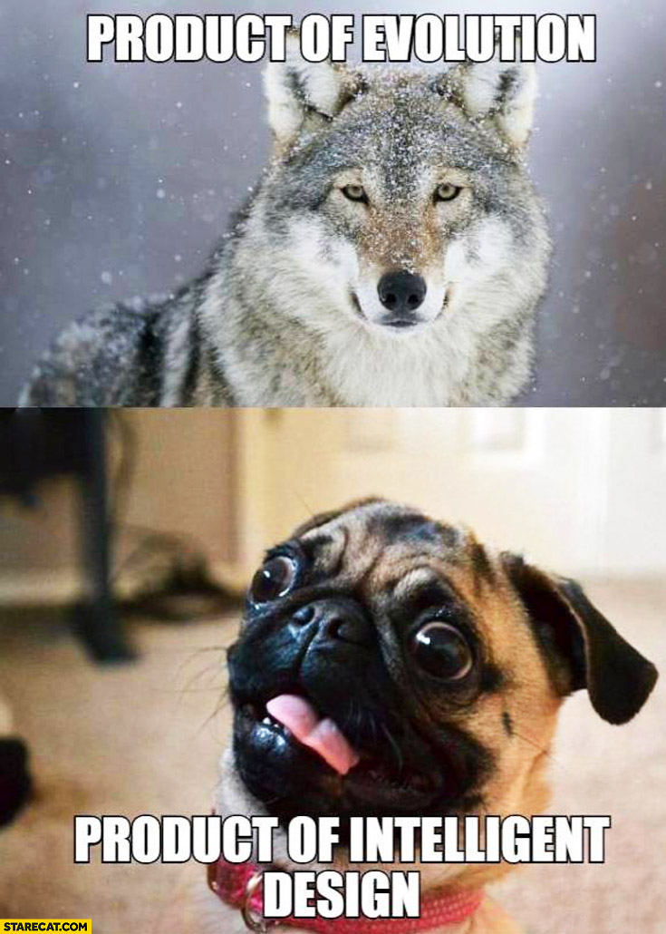 Wolf product of evolution, Pug product of intelligent design