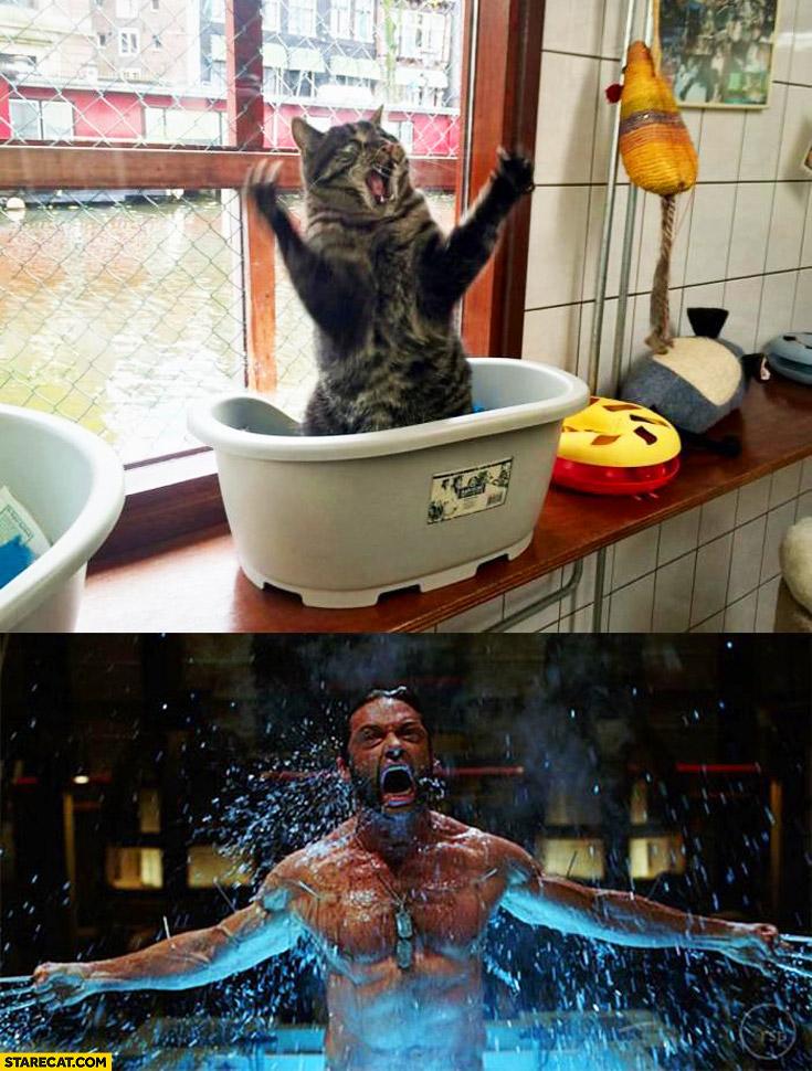 Wolverine cat
