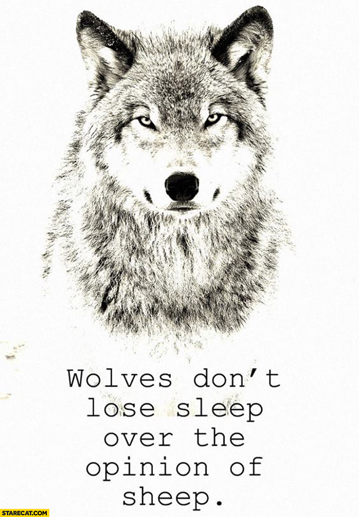 Wolves don't lose sleep over the opinion of sheep