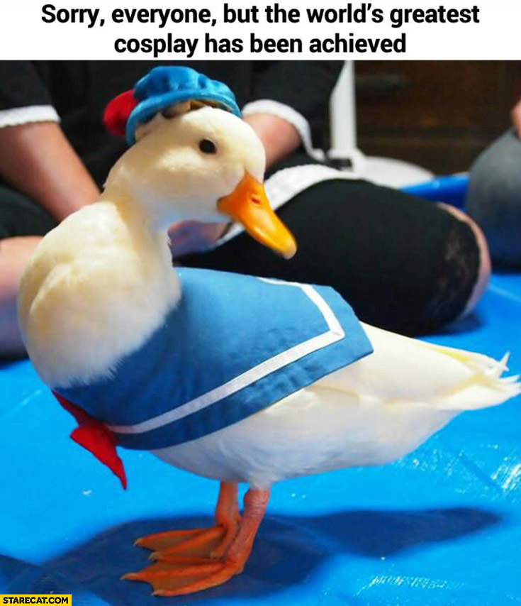 World greatest cosplay duck dressed as Donald Duck