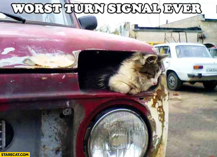 Worst turn signal ever cat kitten