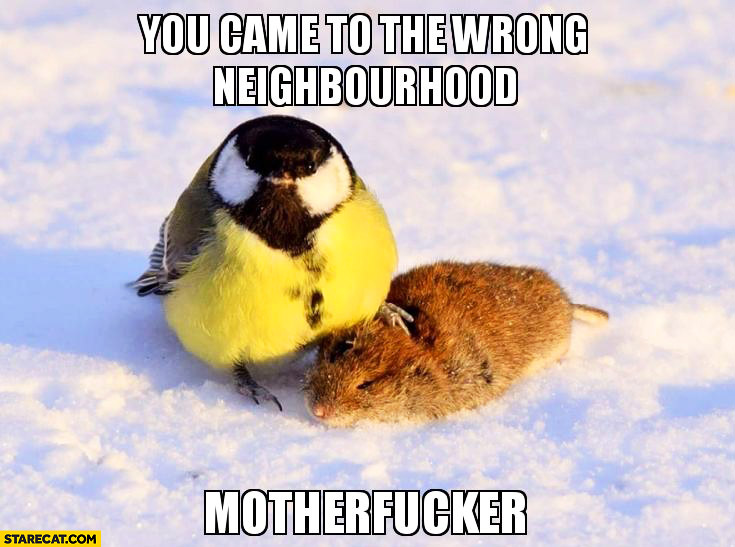 You came to the wrong neighbourhood motherfucker. Badass bird
