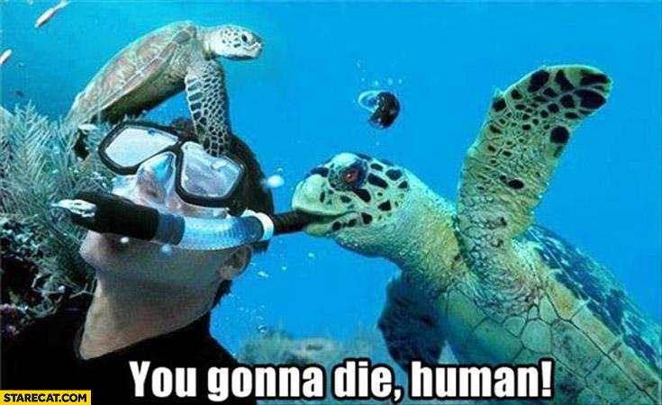 You gonna die human turtle tortoise underwater