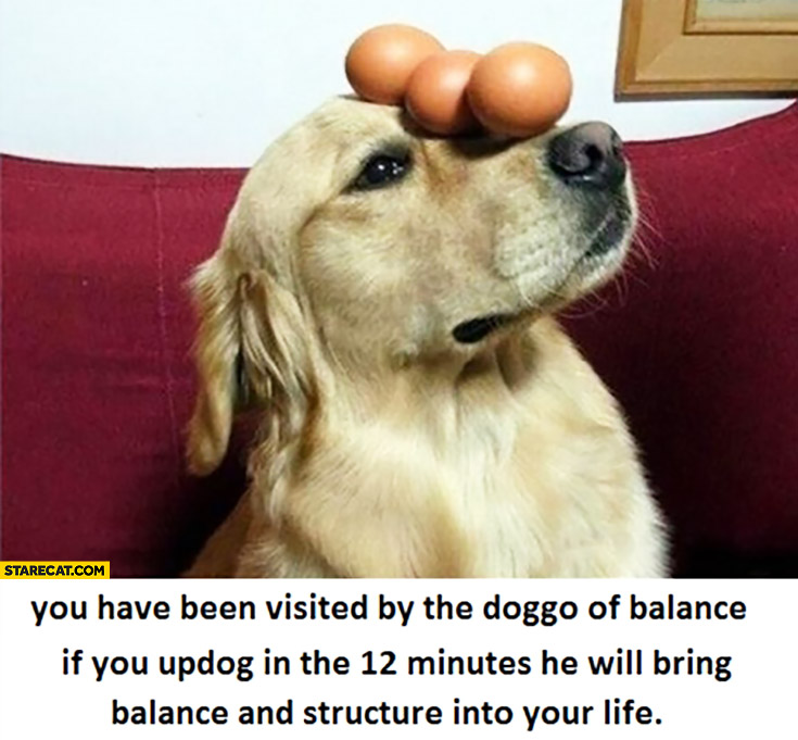 You have been visited by the dog of balance, if you like and share he will bring balance and structure into your life