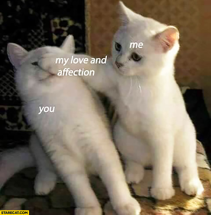 You, me, my love and affection cute cats