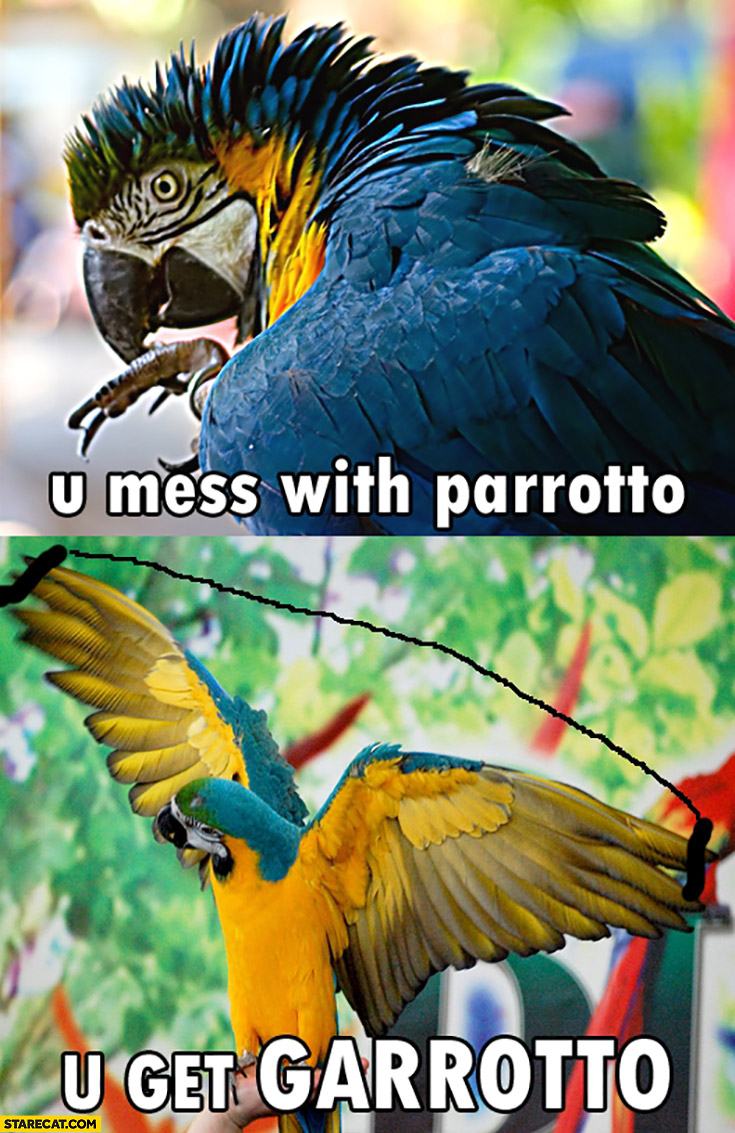 You mess with parrotto, you get garrotto parrot
