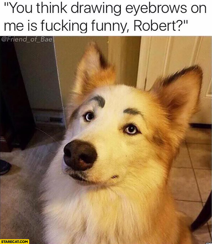 You think drawing eyebrows on me is funny Robert? silly dog