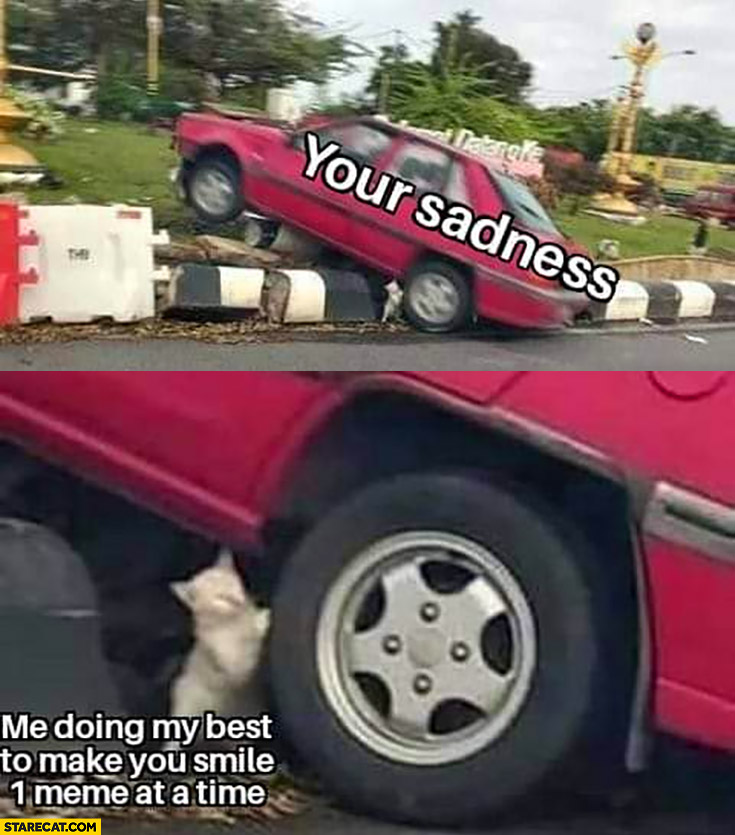 Your sadness, me doing my best to make you smile 1 meme at a time car cat kitty