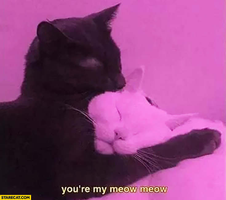 You're my meow meow hugging cats