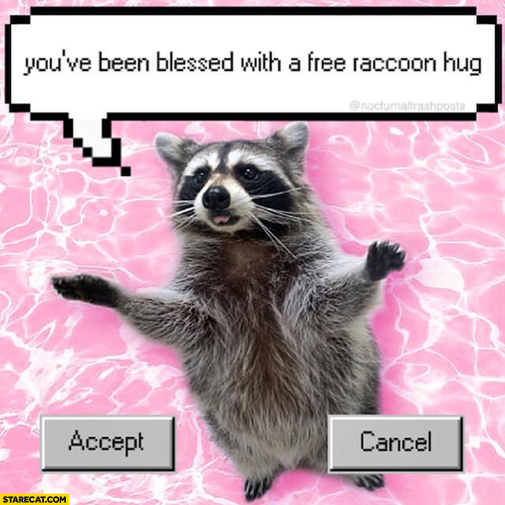 You've been blessed with a free raccoon hug accept cancel
