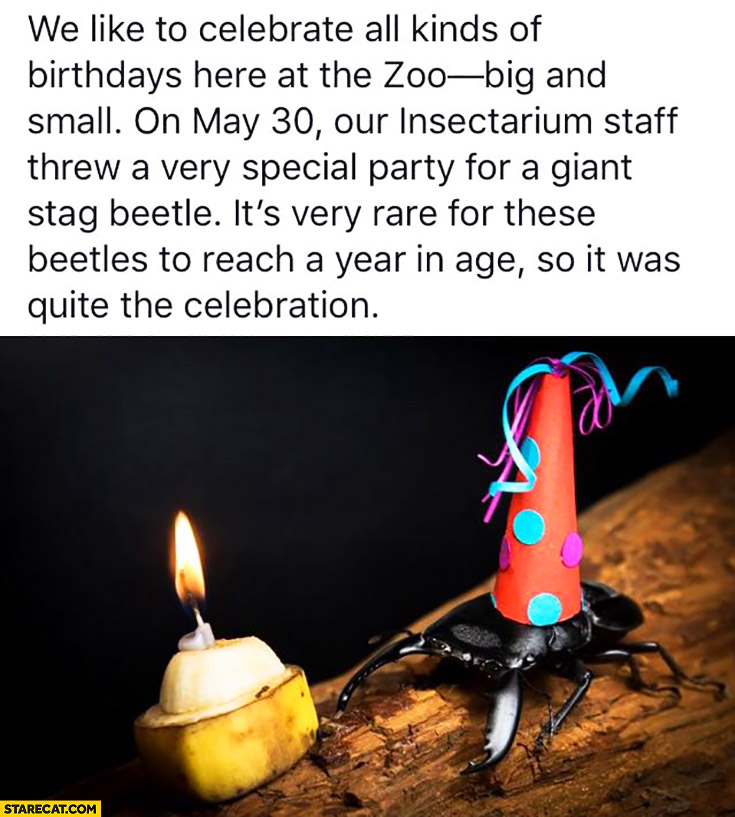 ZOO celebrates birthday of giant stag beetle party
